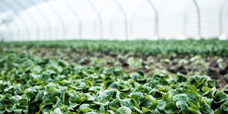 agriculture greenhouse hvac and refrigeration services